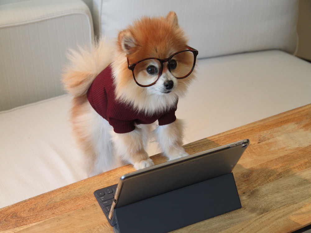 A puppy reading our science-based animal training blog!