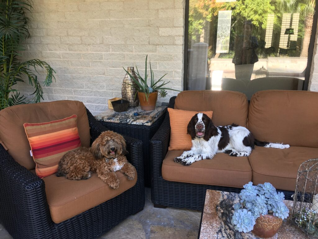Two dogs lounging on some sofas